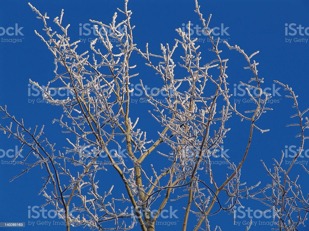 Rime tree royalty-free stock photo
