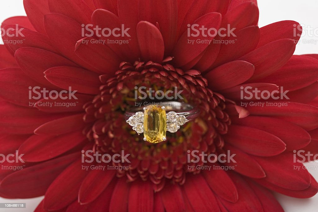 Ring in a Daisy royalty-free stock photo