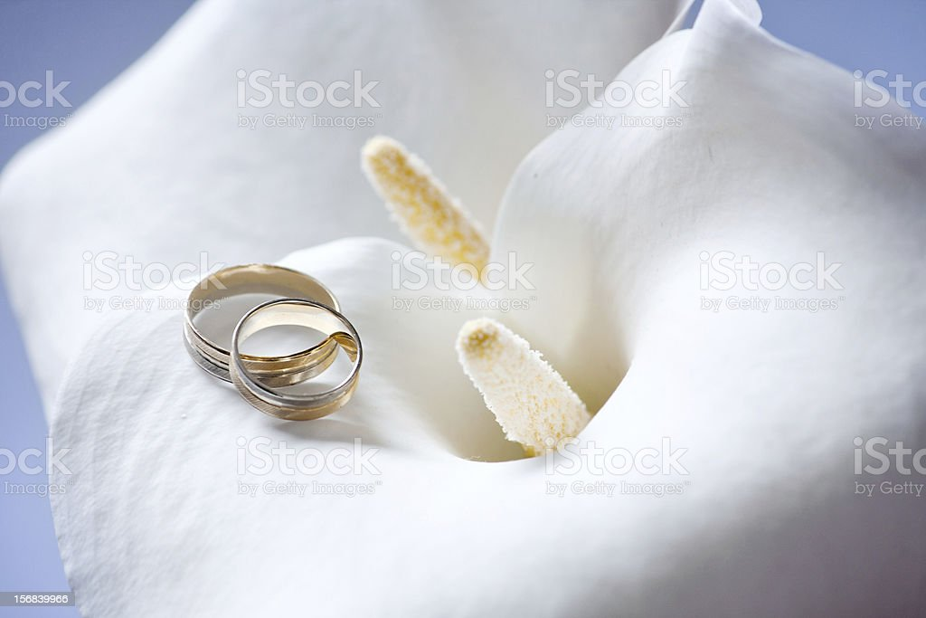 Ring on Calla flower royalty-free stock photo