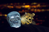 Ring Tail and the Crystal Skull