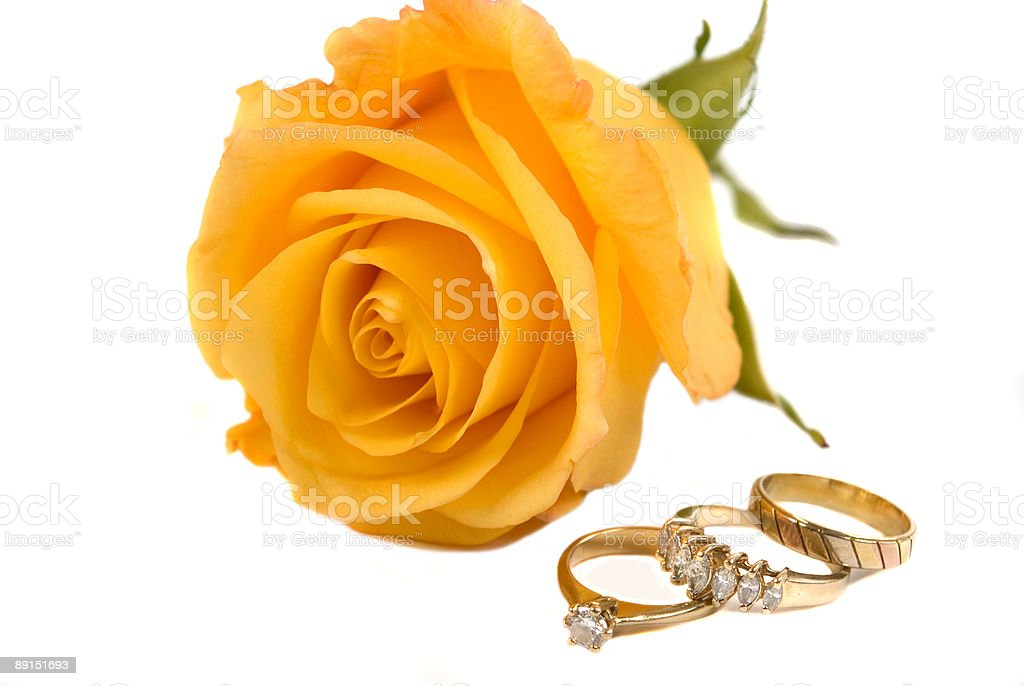 Rings and Rose royalty-free stock photo