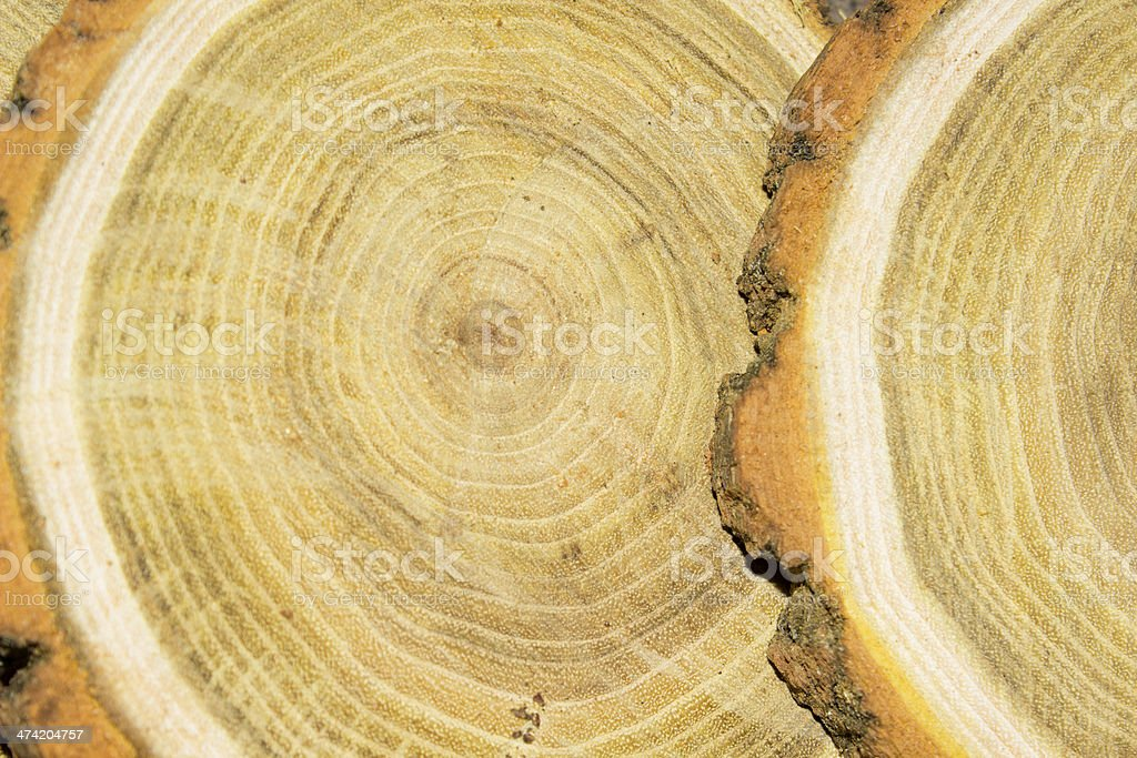Rings and wood stock photo