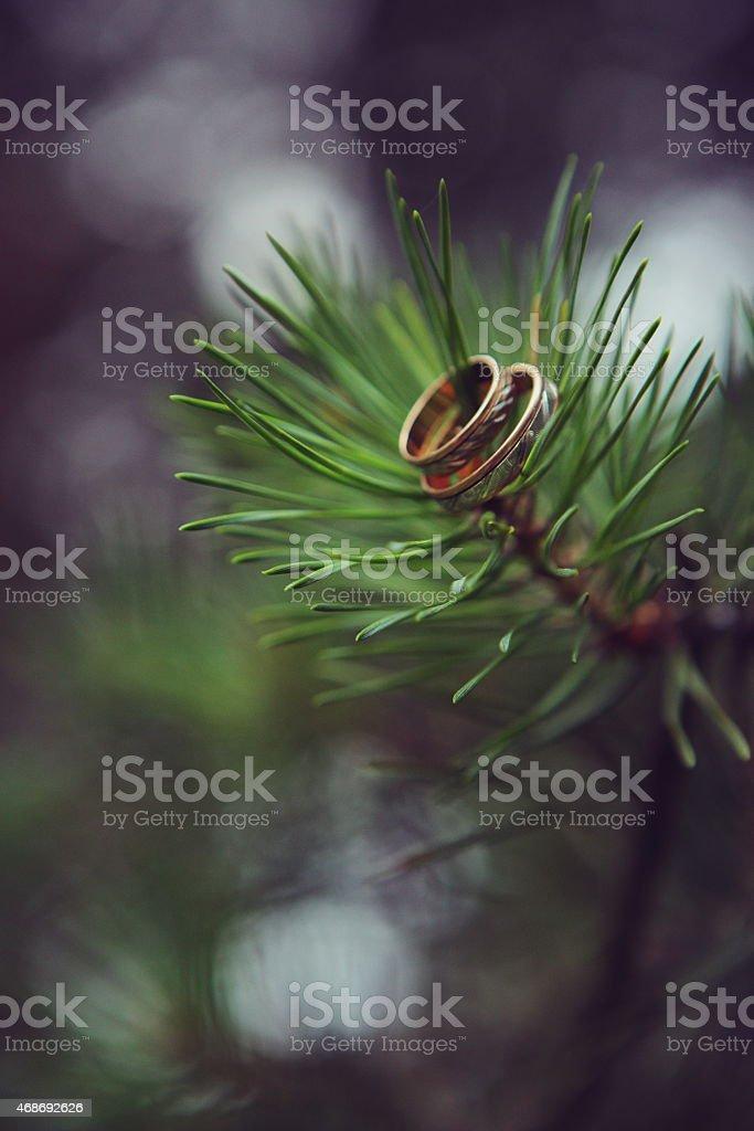 Ringe in einem Baum Lizenzfreies stock-foto