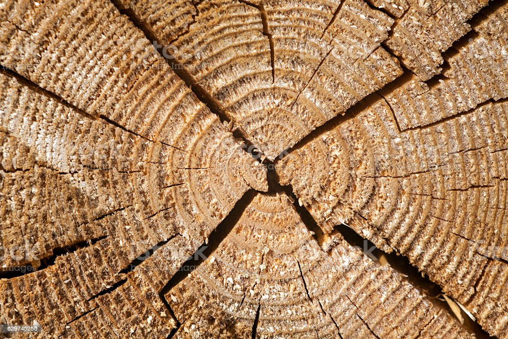 Rings of a tree. Cracks on dry tree. stock photo