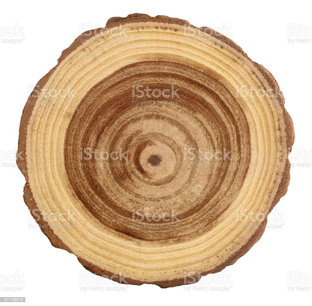 Rings on wooden log stock photo
