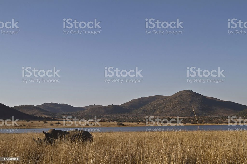 Rino on african landscape stock photo