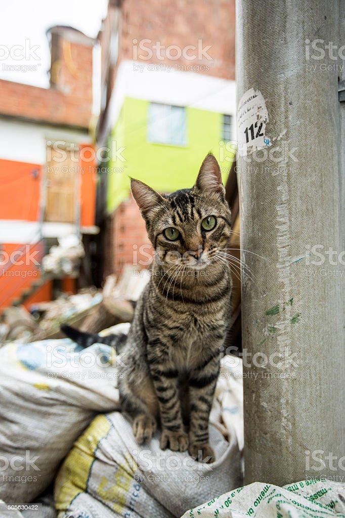 Rio - favela cat stock photo