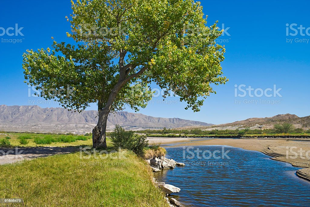 Rio Grande River and cottonwood tree in El Paso Texas royalty-free stock photo