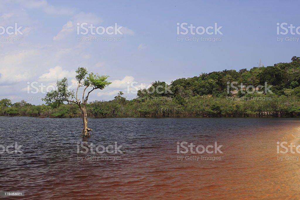 Rio Negro in Amazon stock photo