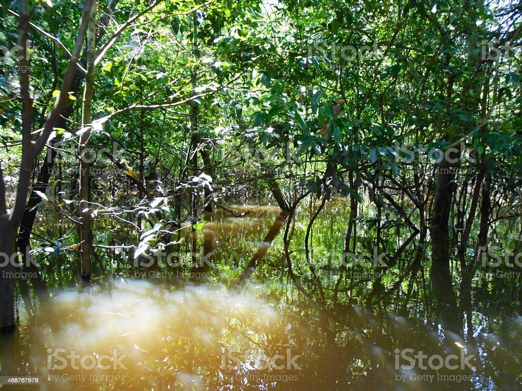 Rio negro stock photo