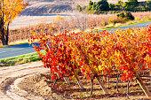 Rioja in November. Spain
