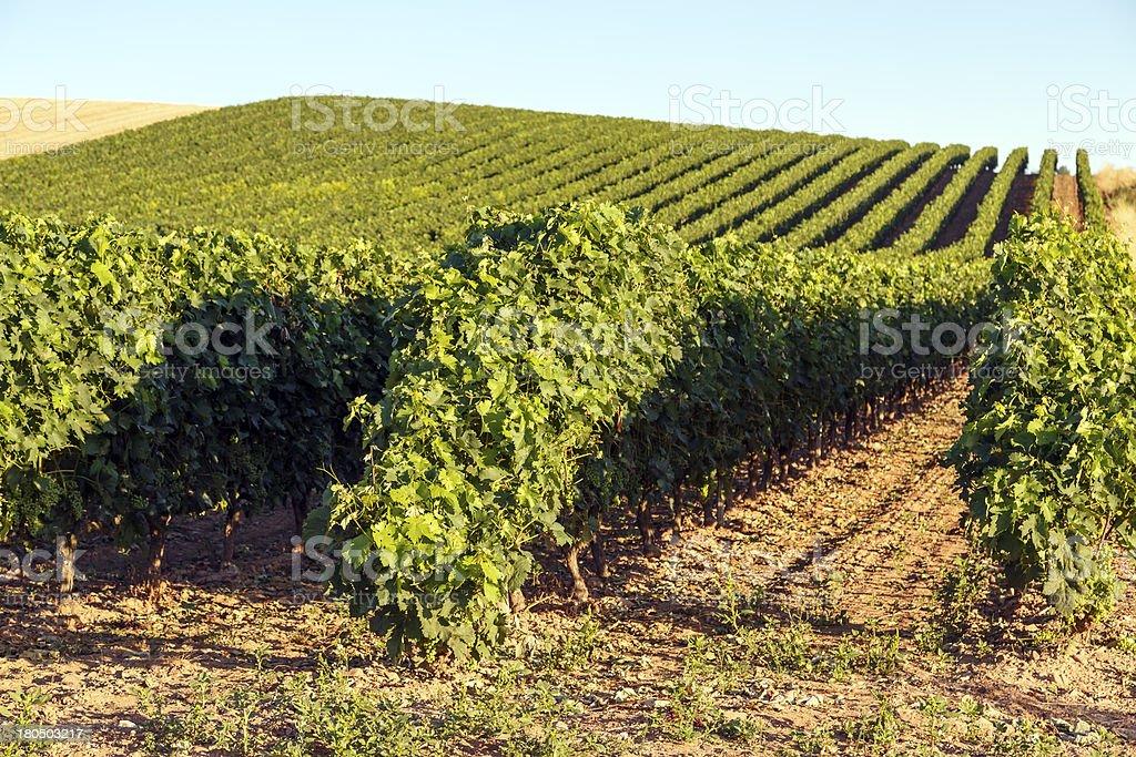 rioja vineyards royalty-free stock photo