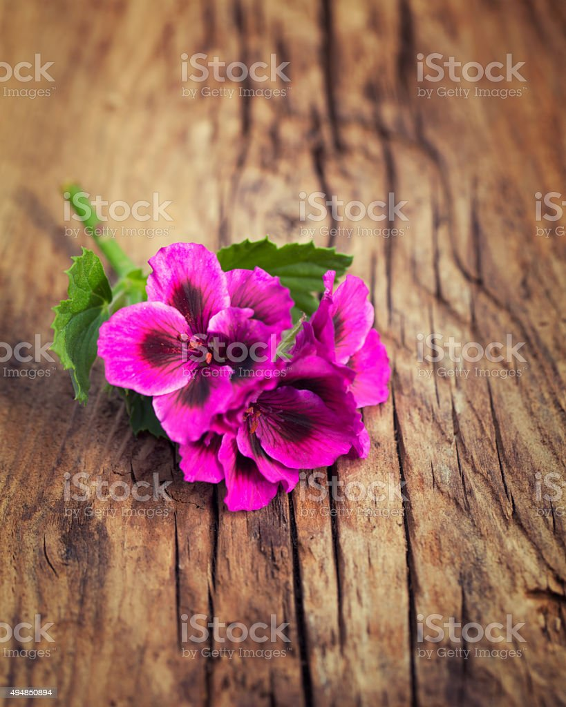Riotous pink geranium on a vintage wood background stock photo