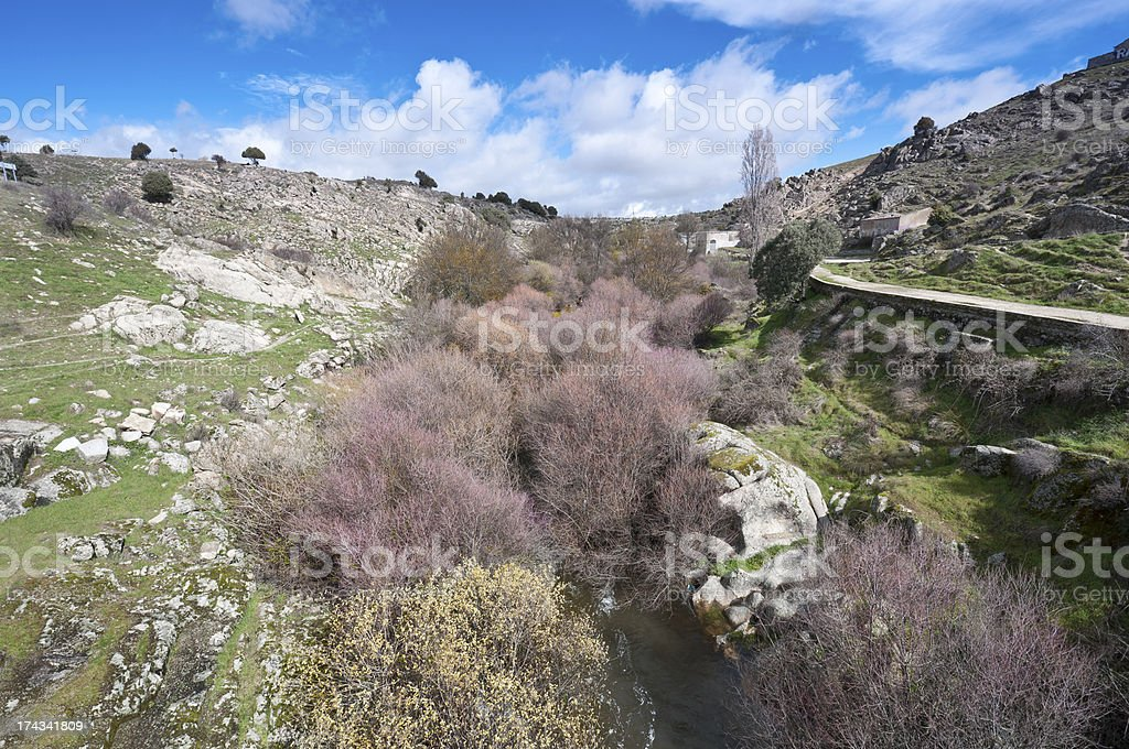 Riparian forest stock photo