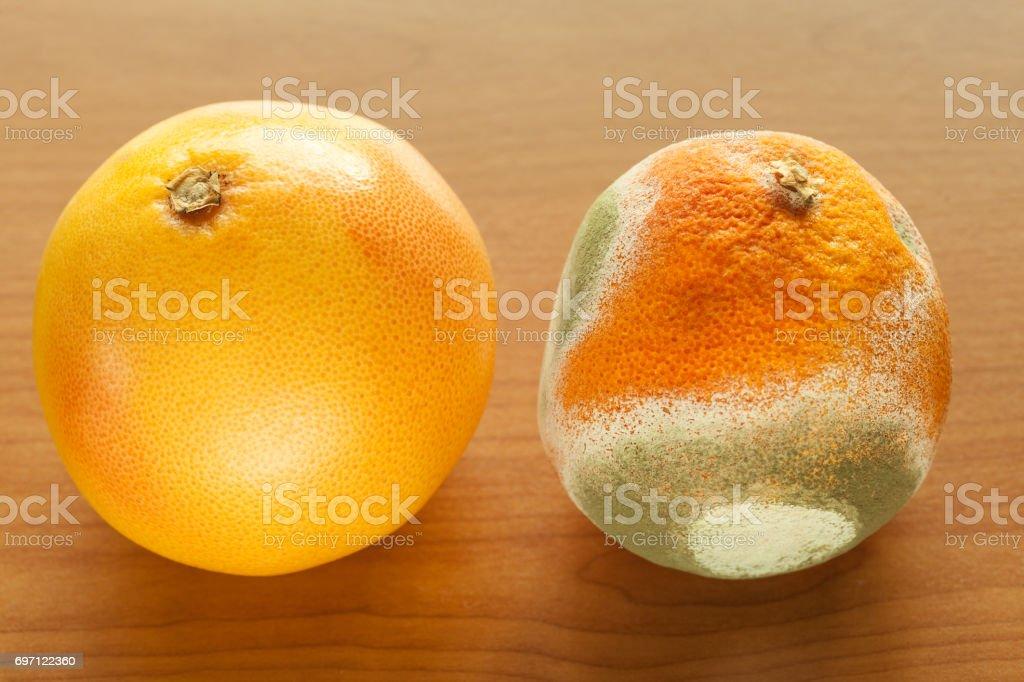 Ripe and moldy grapefriut. stock photo