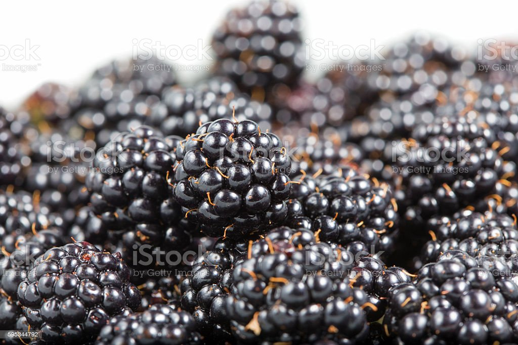 Ripe blackberries close-up stock photo