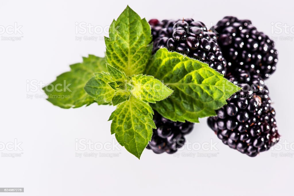 Ripe blackberries with fresh mint leaves on white background stock photo