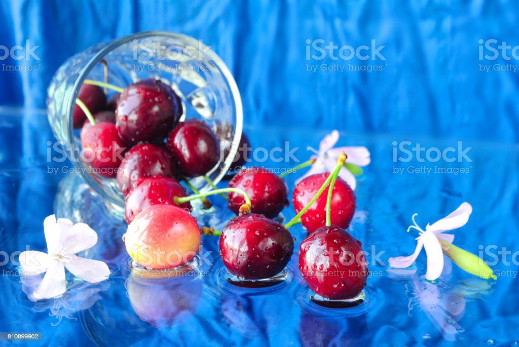 Ripe cherries in water on a blue background stock photo