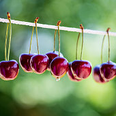 Ripe Cherries on Rope