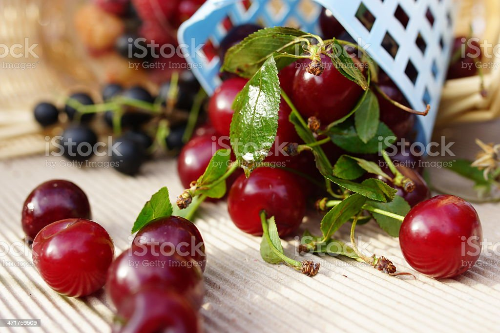 Ripe cherries royalty-free stock photo