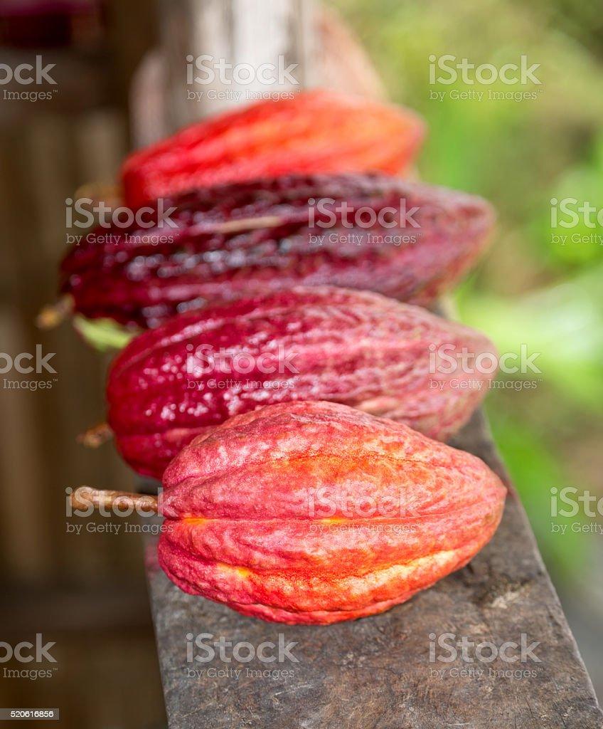 Reife Kakao-Pods für Schokolade Lizenzfreies stock-foto