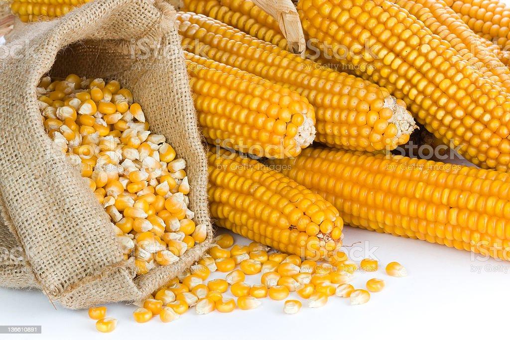 Ripe corn in bag royalty-free stock photo
