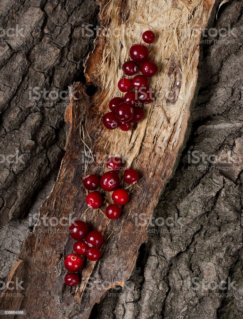 Ripe cranberries on a piece of bark stock photo