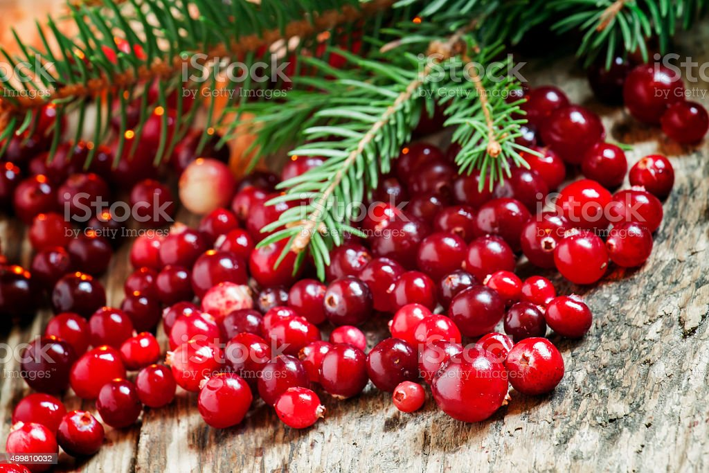 Ripe cranberries with fir branches stock photo