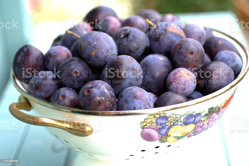 Ripe Damsons stock photo