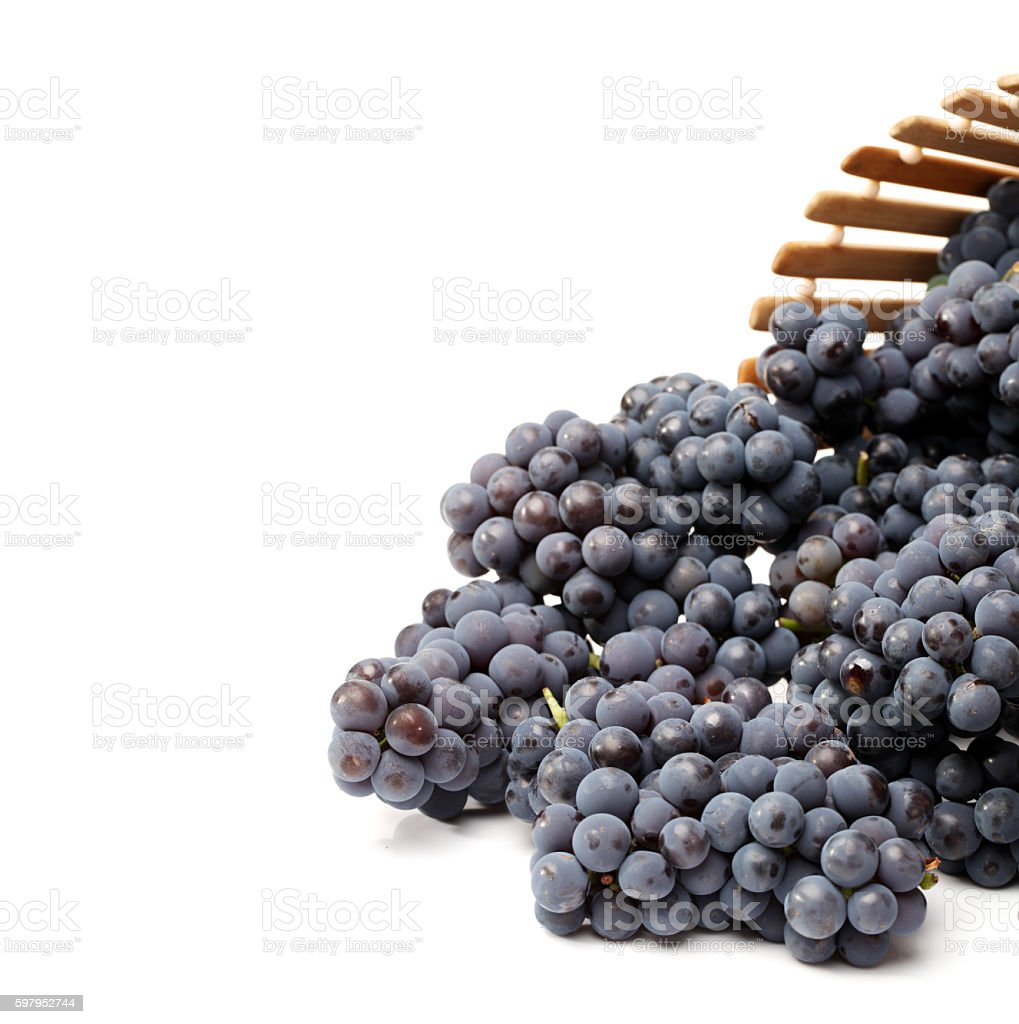Ripe dark grapes stock photo