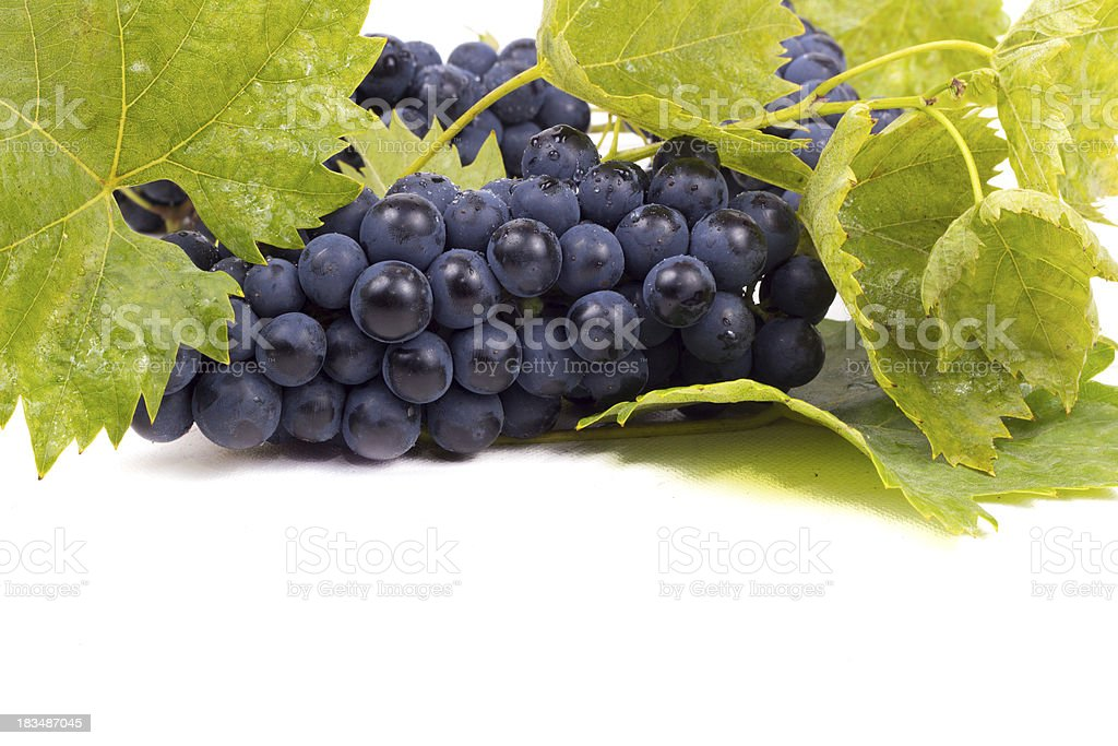 Ripe dark grapes with leaves royalty-free stock photo