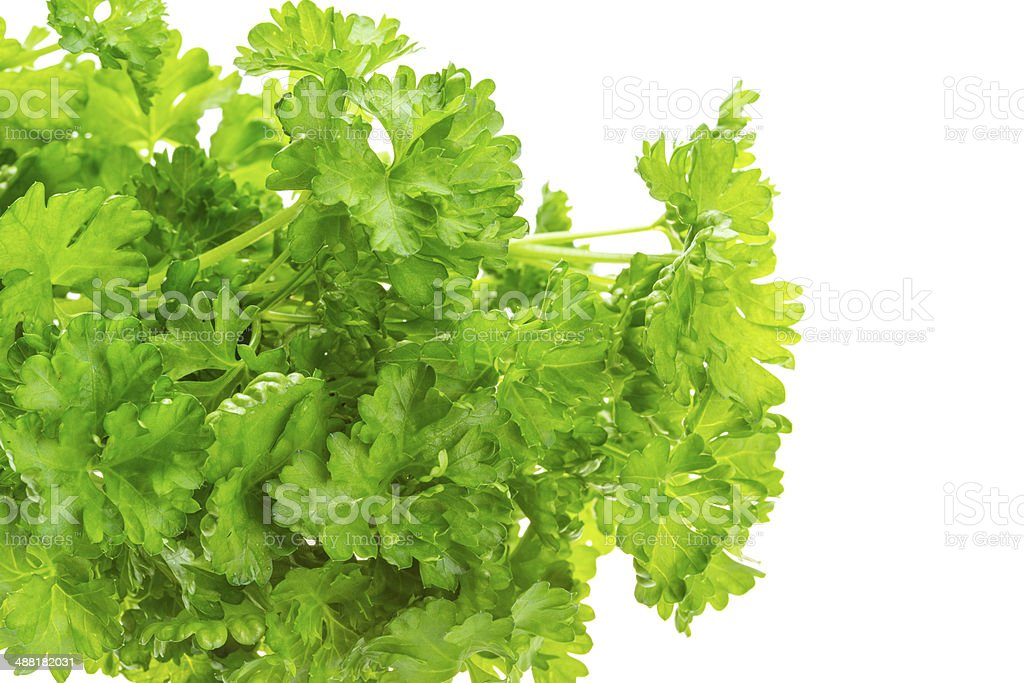 Ripe fresh Parsley stock photo