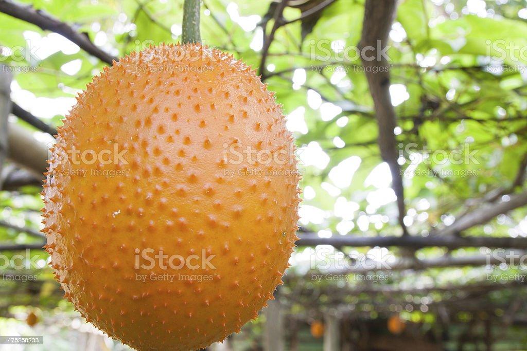 Ripe gac fruit stock photo
