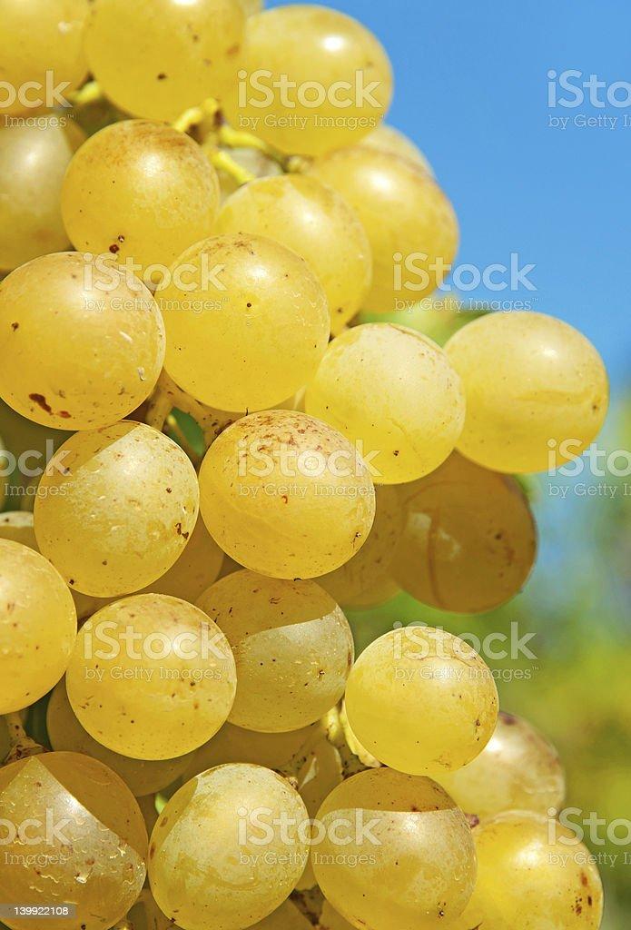 Ripe grape close up royalty-free stock photo