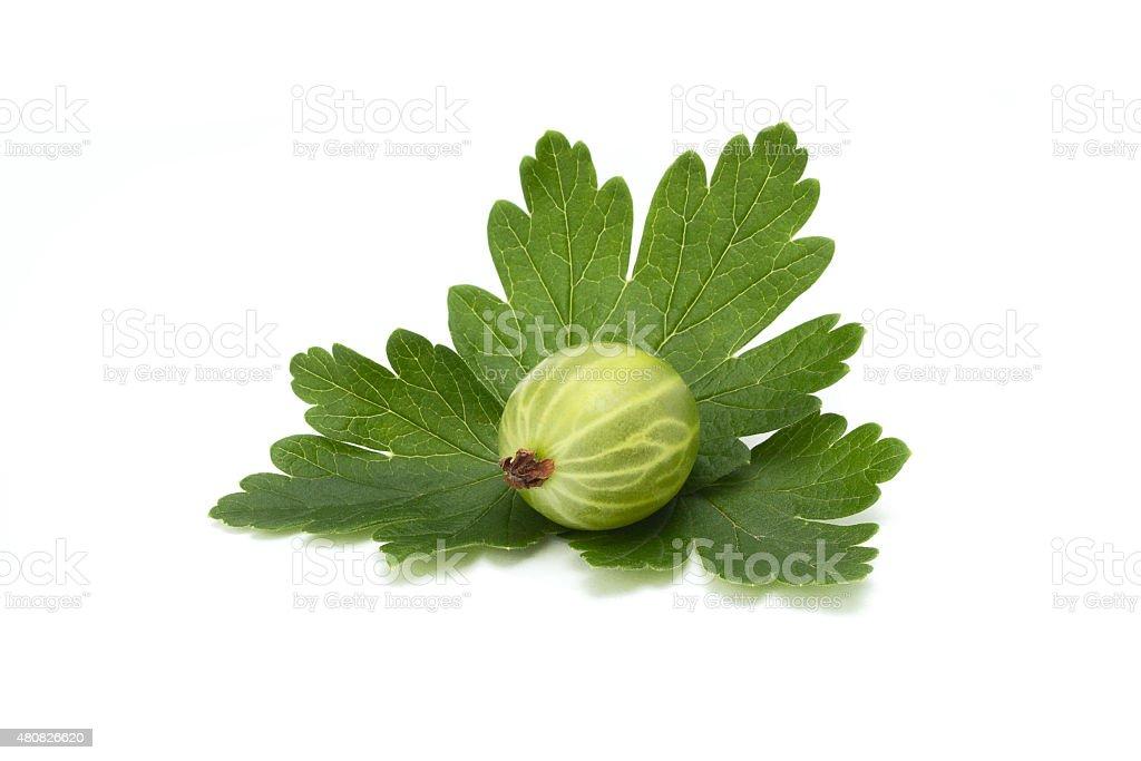 ripe green gooseberries stock photo