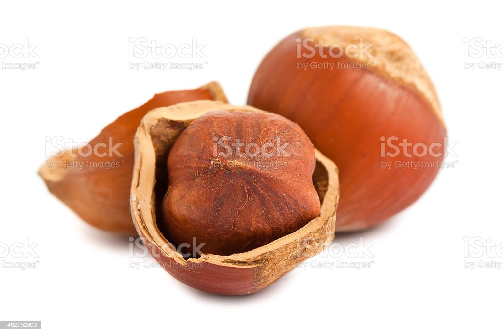 Ripe hazelnuts stock photo