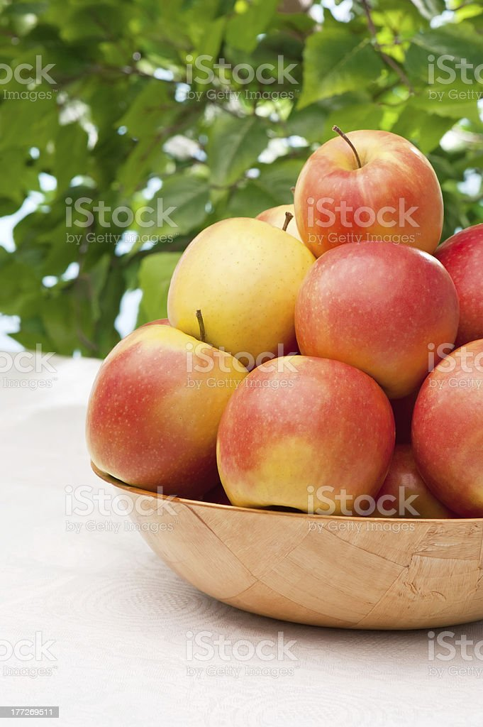 Ripe juicy apples on the table in garden royalty-free stock photo