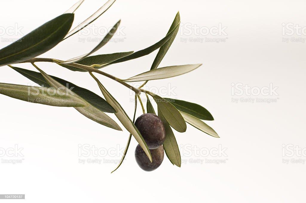 Ripe Olives stock photo