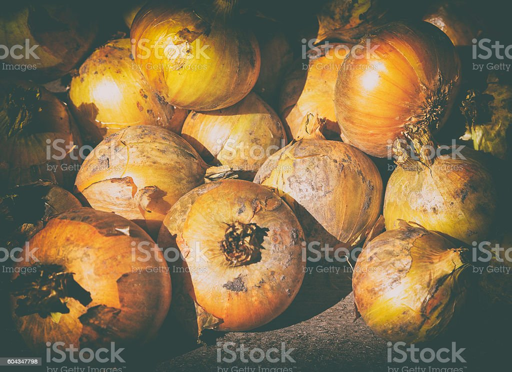 Ripe onions stock photo