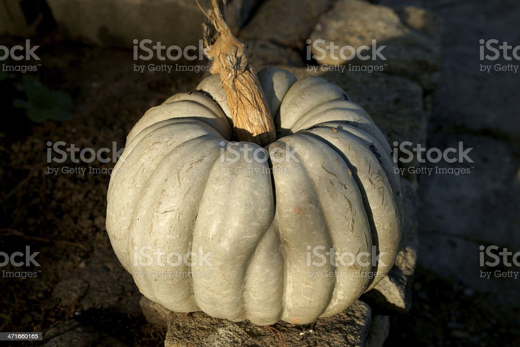 Ripe Pumpkins royalty-free stock photo