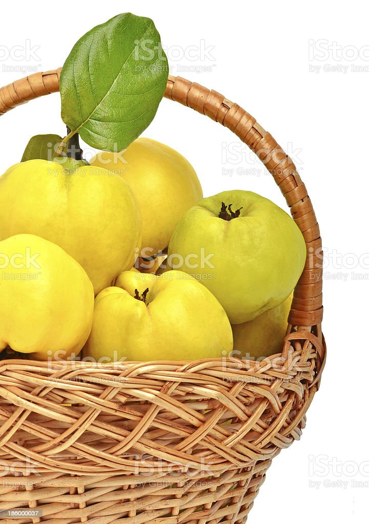 Ripe quince in the basket royalty-free stock photo
