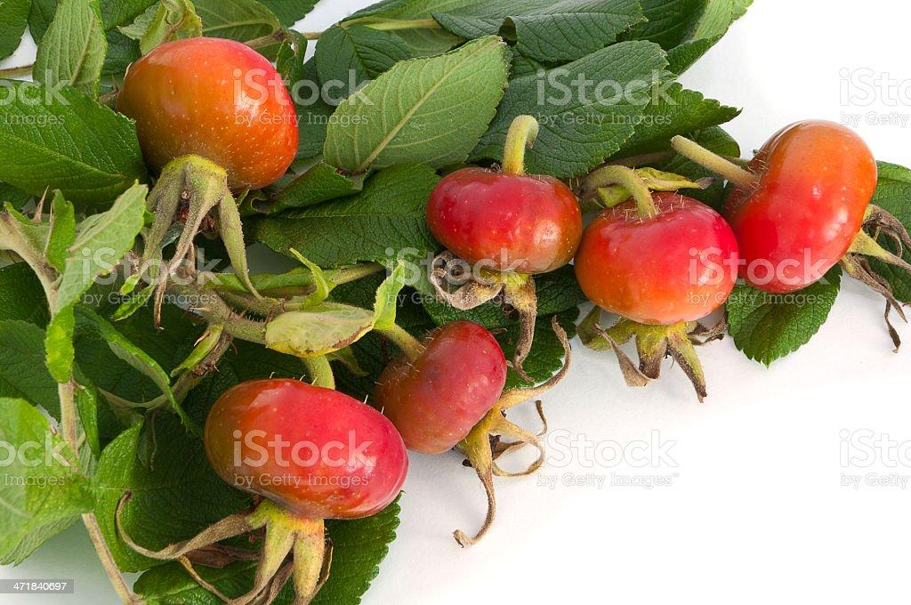 ripe rose hips royalty-free stock photo