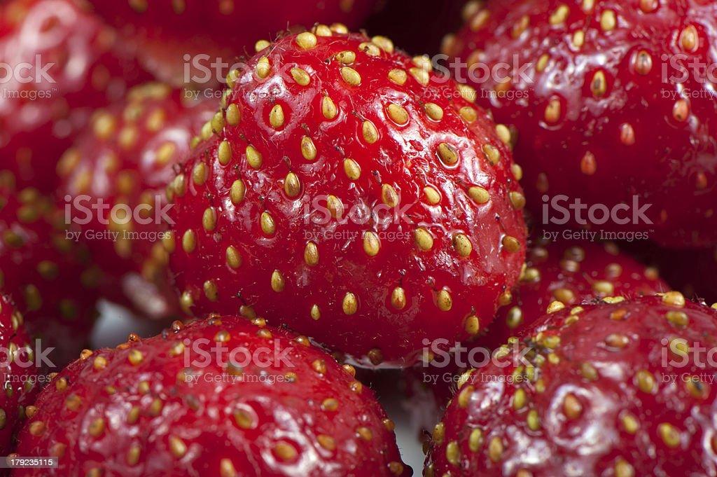 Ripe strawberries royalty-free stock photo