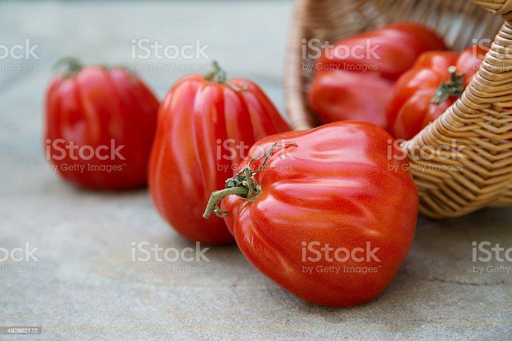 Tomates maduros foto de stock libre de derechos