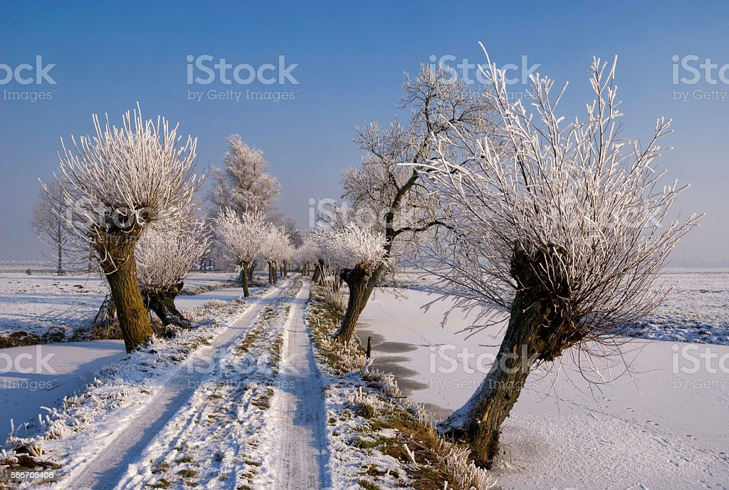 Riped trees on the Tiendweg road stock photo