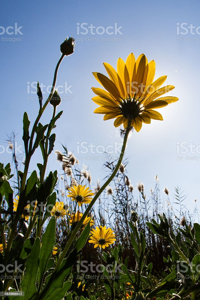 Rise up and Shine stock photo
