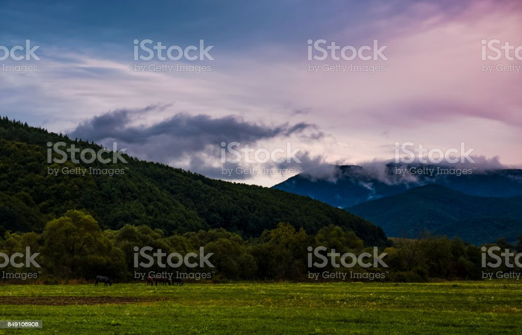 rising clouds in valley at dawn stock photo