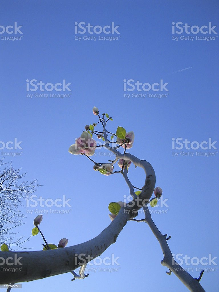 Rising Flowers royalty-free stock photo