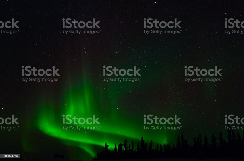Rising Green stock photo