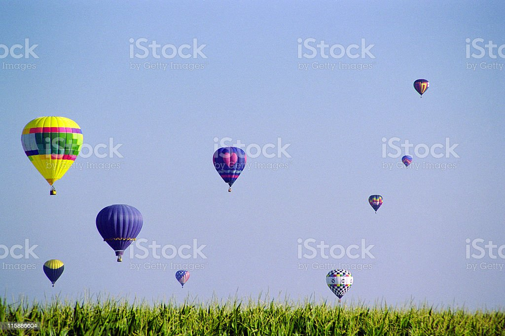 Rising out of the corn royalty-free stock photo